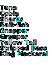 Tuna Cobia Sharks Bait-fish Snapper Grouper Yellow Tail Stripped Bass King Mackerel